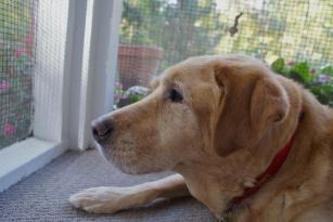 Maureen's late dog Digger, who passed away in 2012 at age 14.